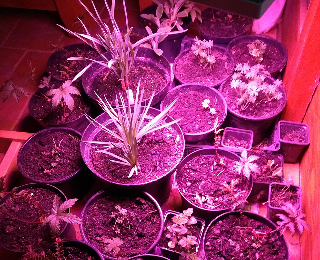 Some EM Garden plants getting help under grow-lights in this cold April